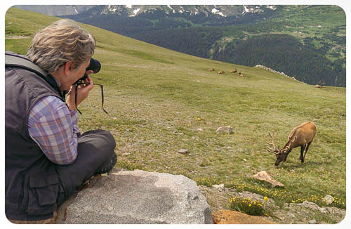 Photographing the Elk